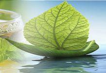 Simarouba Yoga and Naturopathy Center in Bengaluru Karnataka